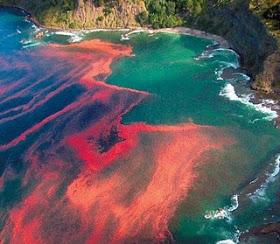 red+tides
