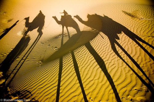 camel_shadows