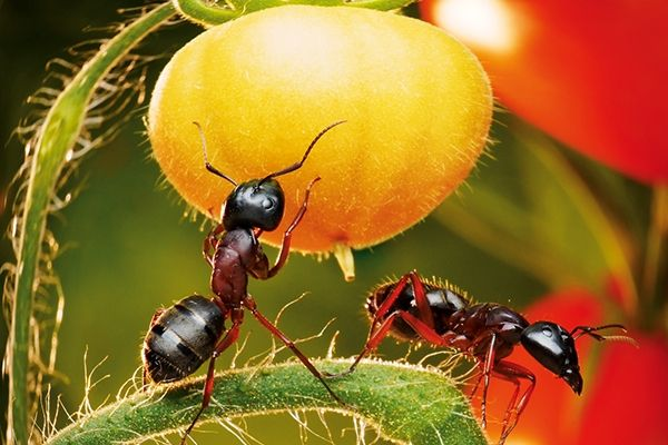 Cerpen Semut-Semut Kecil ( Bukan Kisah Semut )